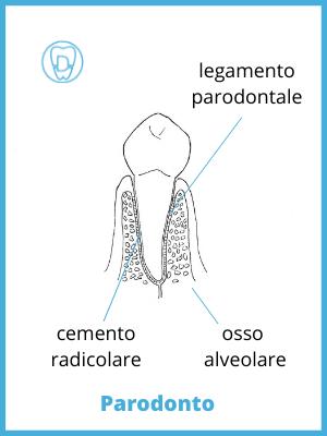 disegno di dente con indicati legamento, cemento radicolare e osso alveolare